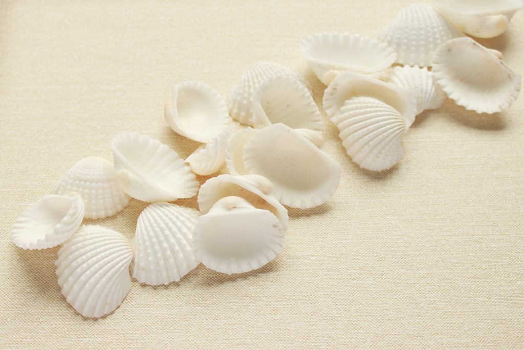 Seashell Collage Step 1